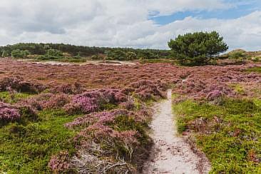 Die abwechslungsreichste Heidewanderung in Holland