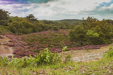 Heidewandern in Schoorl