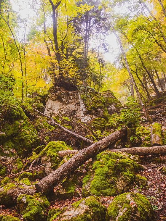Traufgang Felsenmeersteig - Felsenmeer Schwäbische Alb