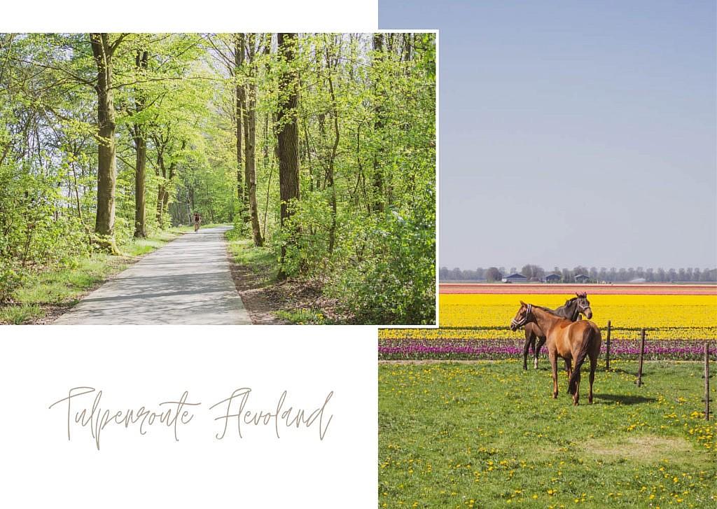 Tulpenroute Flevoland - Ausflugsziele Elburg